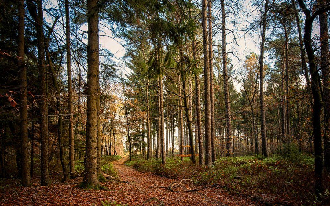 Gute Aussicht – Super Aussicht Runde von Tecklenburg